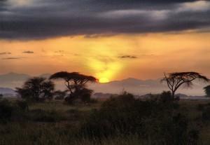 santé environnementale médecine évolutionniste - savane arborée d'Afrique de l'Est
