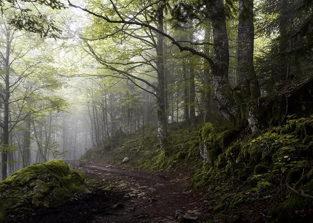 Shinrin-yoku enfants - forêt humide