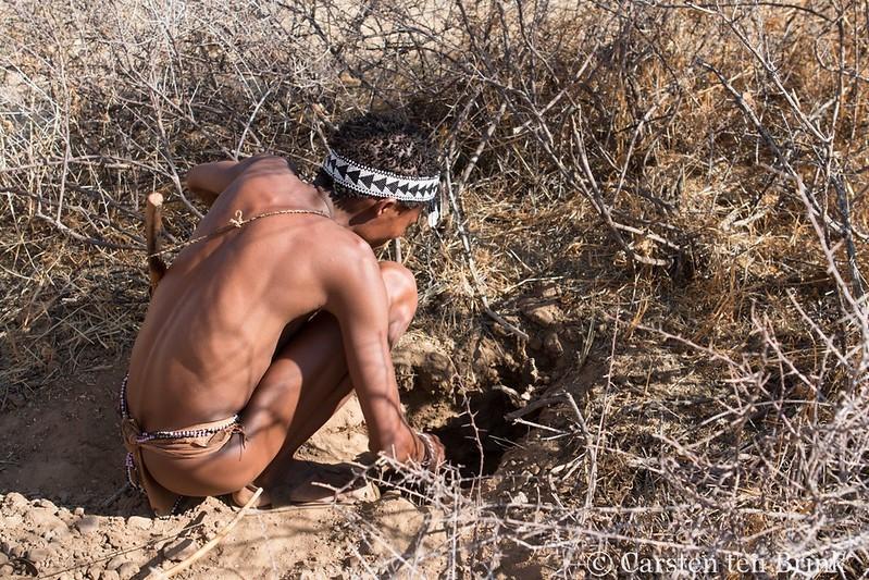 santé environnementale médecine évolutionniste - un chasseur-cueilleur qui récolte