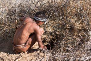 santé environnementale médecine évolutionniste : un cueilleur