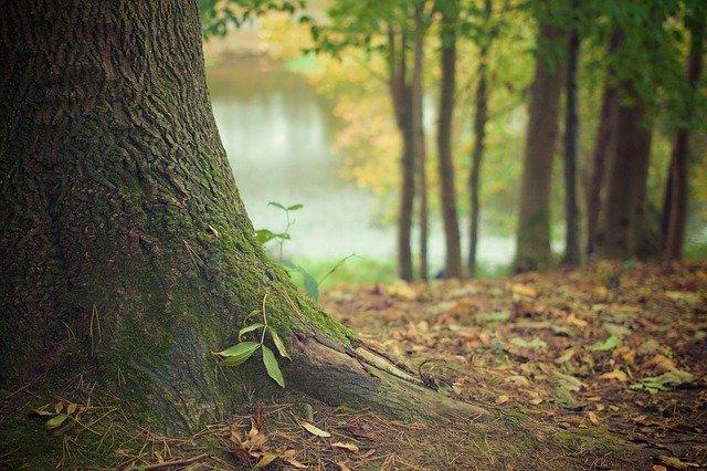 Bain de forêt enfants - tronc d'arbre et racines