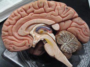 Cerveaux danger Philippe Grandjean2