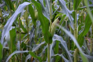 pesticides sante enfants5
