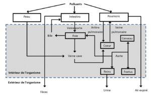 polluants distribution corps