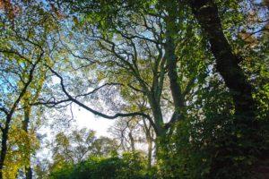 besoin nature louis espinassous4