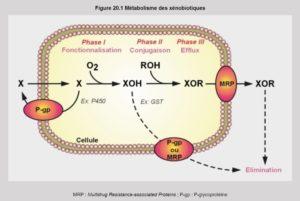 detoxification depollue22